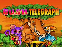 Популярный игровой аппарат Bush Telegraph